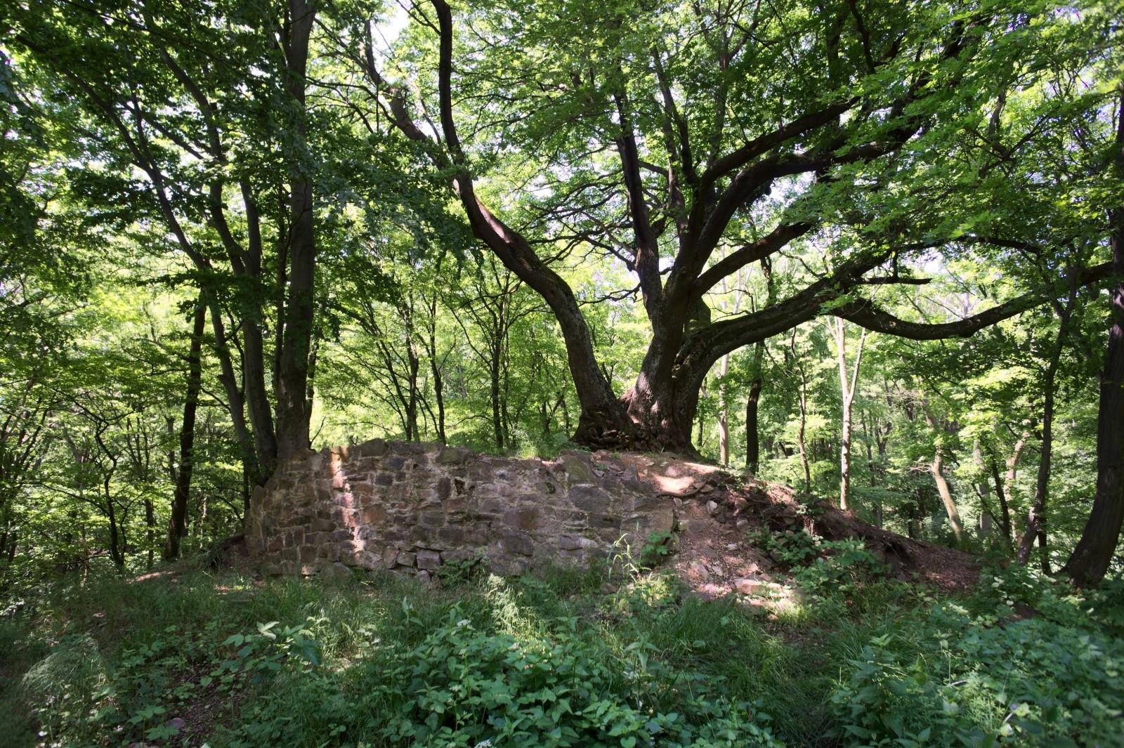 Zřícenina hradu Zuvačov