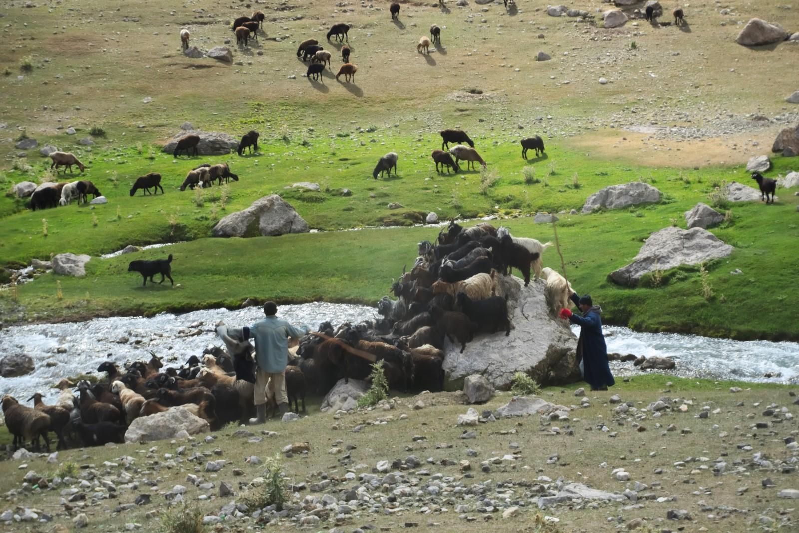 Pastevci hlídají stádo
